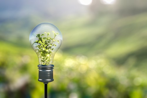 Lightbulb on a background of green scenery